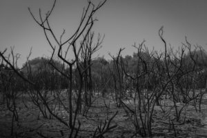 Burnt bushes and trees in Sardinia, Italy.